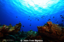 The Maxy Dive 14 metres Mauritius Pointe Aux Piments by Jean-Yves Bignoux 